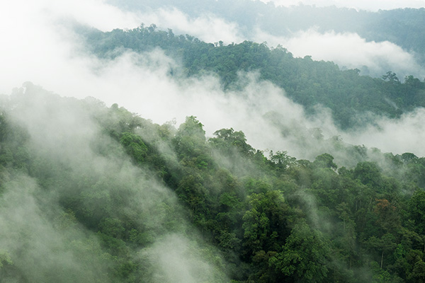 mindo-cloud-forest