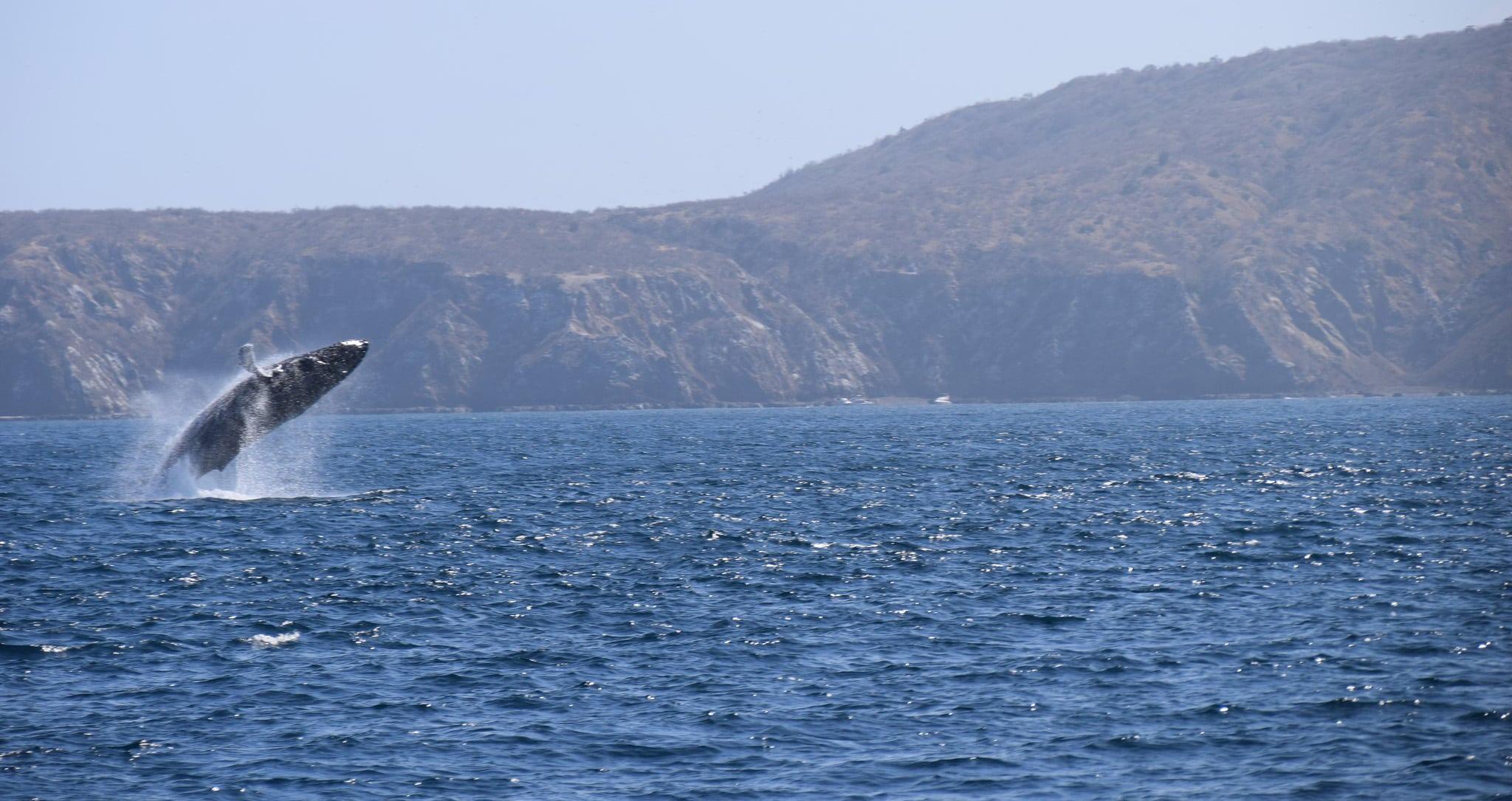 baleias - montañita equador